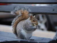 images/esemenyek/thumbnails/squirrel_783160_640.jpg